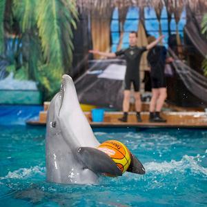Дельфинарии, океанариумы Железнодорожного