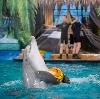 Дельфинарии, океанариумы в Железнодорожном